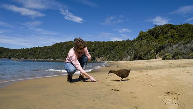A friendly weka on Ulva Island